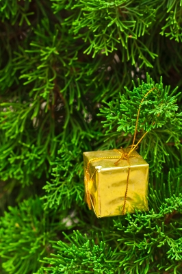 Small Gift Box on Pine